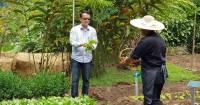 Fresh Produce Straight from The Banjaran's Organic Gardens