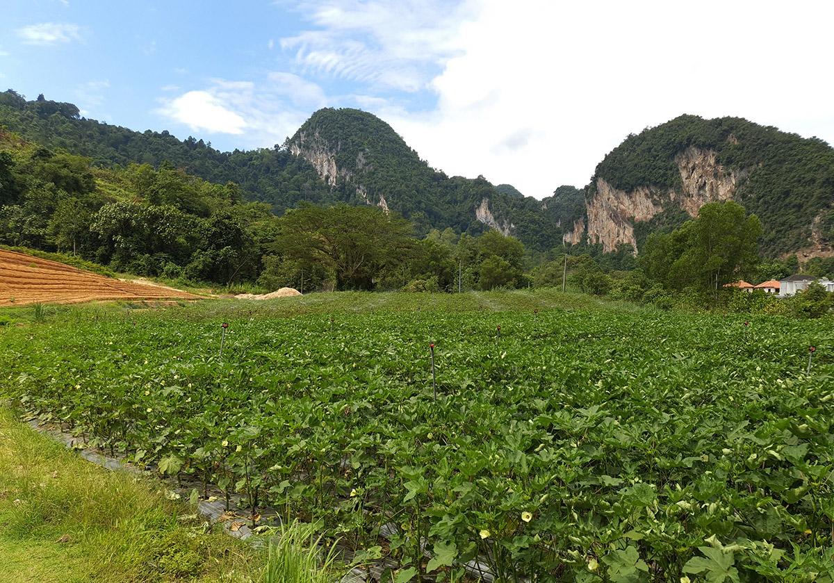 Sunway City Ipoh's 20 acre organic farm